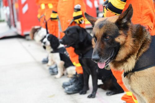 Entrenamiento de perros de rescate