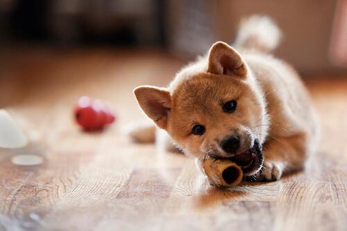 Mala alimentación en tu mascota