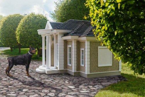 Perro en una mansion