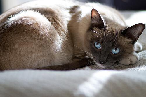 Cuidados de una mascota preñada