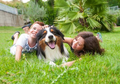 El mejor perro para tus hijos: pequeño o grande