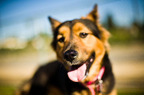 Nariz de los perros : todo lo que hay que saber sobre ella