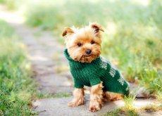 Perro pequeño en el campo