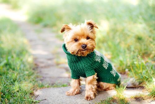 Nombres para perros pequeños