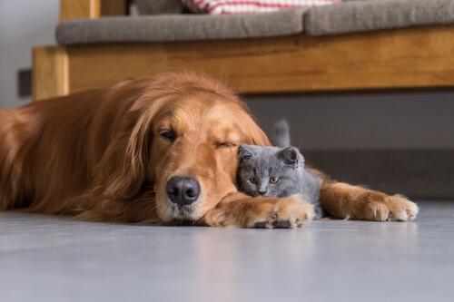 Oído en perros y gatos