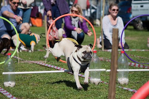 Perros saltando en el parque