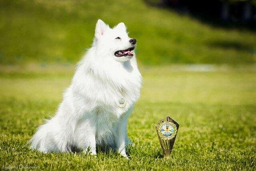 Perro ganador en el campo