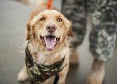 Perro en un entrenamiento