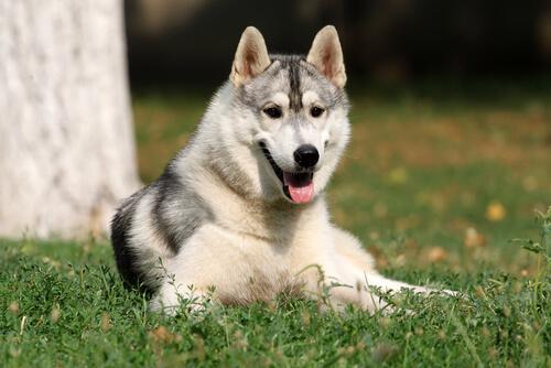 ¿Los perros tienen inteligencia emocional?