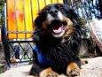 Perro tumbado sonriendo