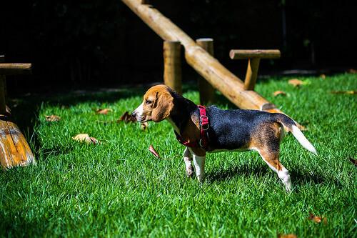 Cuáles son las razas de perro más populares