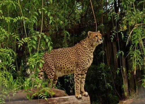 El zoológico de Buenos Aires se transformará en un ecoparque