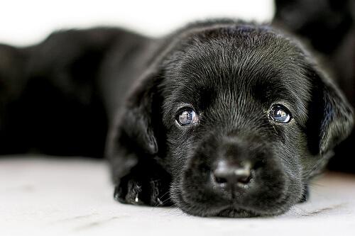 Adopción de perros: todo lo que debes saber