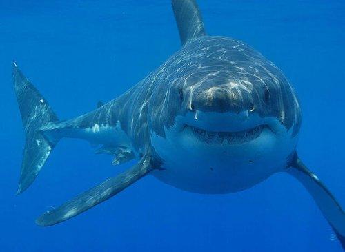 10 animales más grandes del mundo