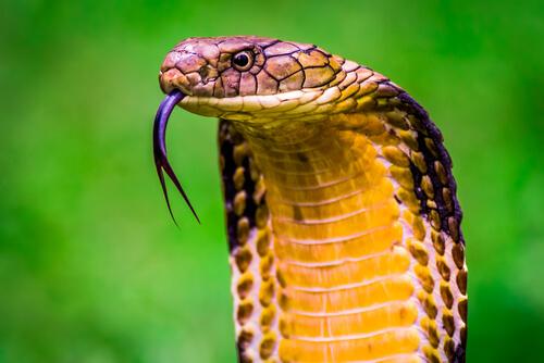 10 animales más venenosos del mundo
