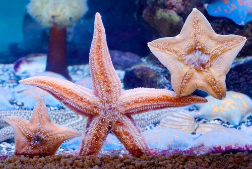 Estrella de mar en un acuario