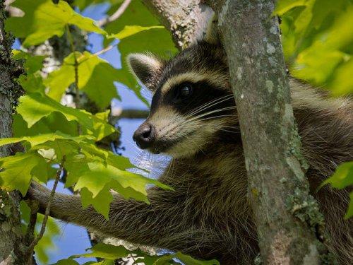 9 animales que viven en el bosque