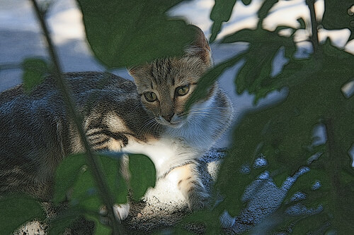 Gato entre una rama