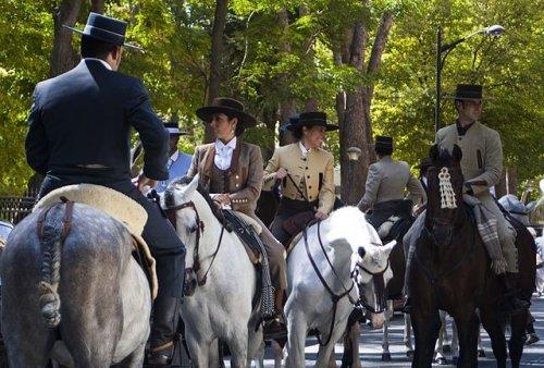Caballos pura raza española
