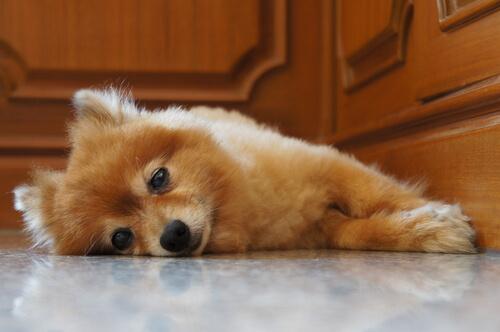 como aliviar colicos en cachorros recien nacidos