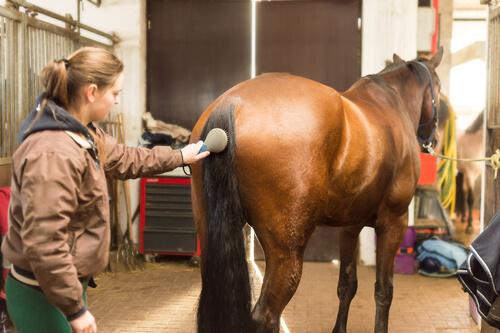 Mujer peinando la cola del caballo
