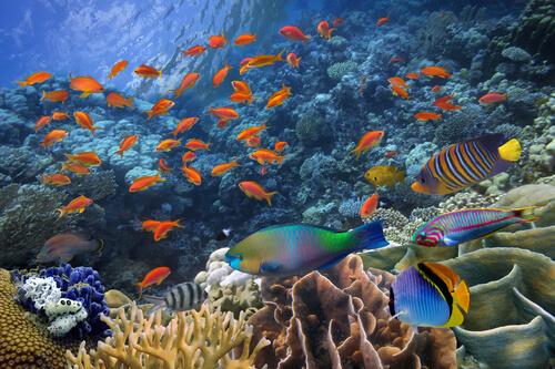 ¿Cómo se reproducen los peces?