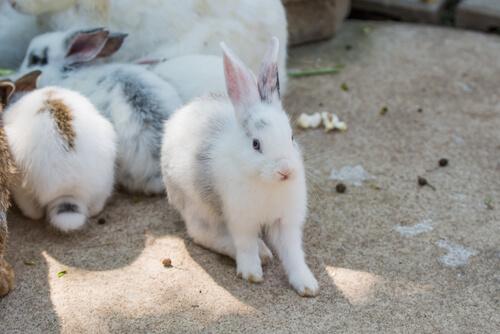 Conejos en casa: consejos de higiene