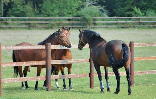 Criar caballos