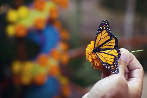 Mariposa en la mano de una persona