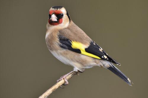 Pájaros en casa que más cantan