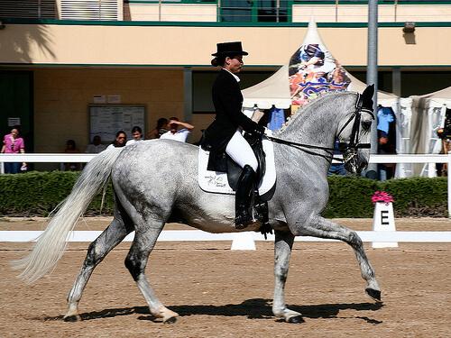 15 curiosidades sobre caballos