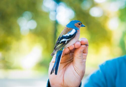 Cómo desparasitar a tu pájaro