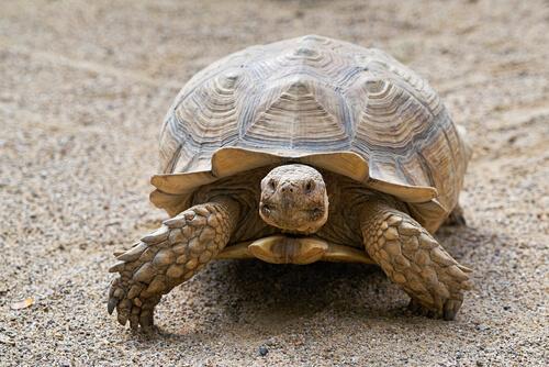 ¿Cómo saber la edad de una tortuga?