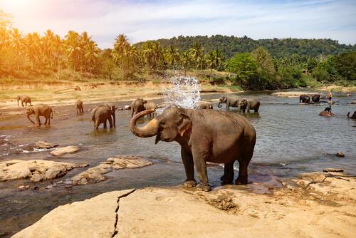 Elefante bañandose en el rio