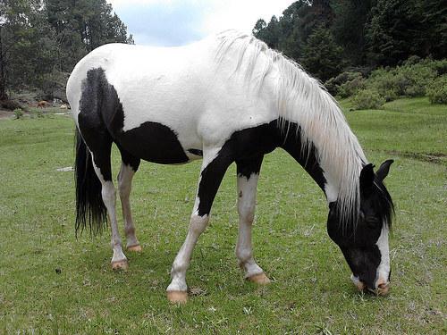 ¿Cómo elegir un caballo?