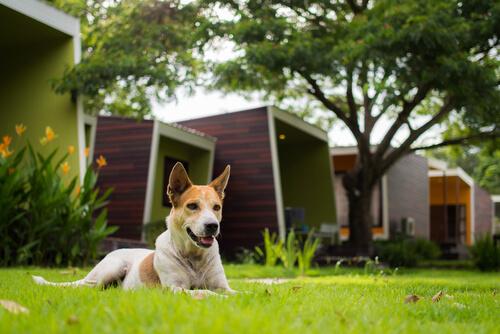 Consejos para evitar problemas con tu perro