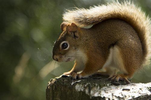 Hibernación: qué es y qué animales la practican