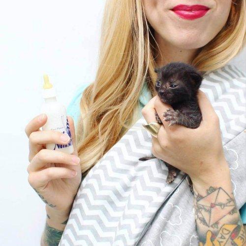 Kitten Lady: la mujer que salva a cientos de gatitos