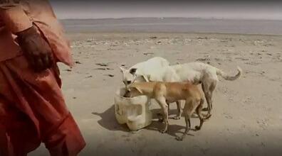 Perros comiendo en la isla de los perros