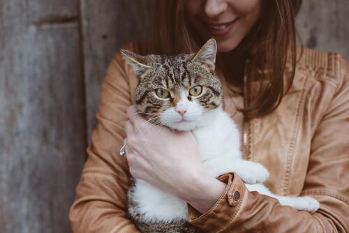 La Toxoplasmosis en el gato