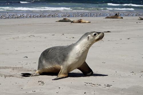 8 mamíferos marinos más impresionantes