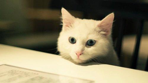 Mascotas ideales para pisos