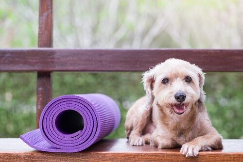 Medicina preventiva para mascotas