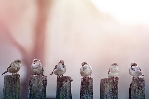 Cuatro pajaros posados en unos postes