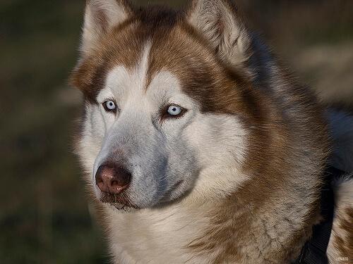 Ojo seco en perros: causas, síntomas y tratamiento