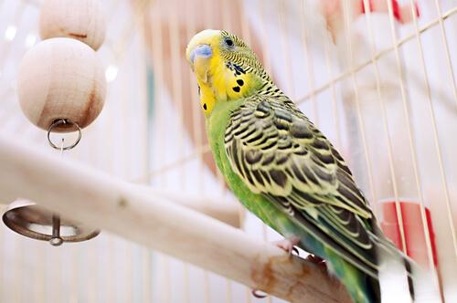 5 enfermedades en pájaros enjaulados
