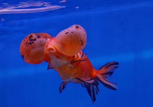 7 peces de agua fr a mis animales for Peces de agua estancada