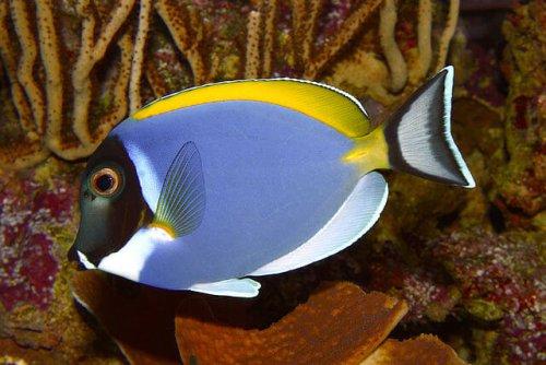 7 peces de agua cálida