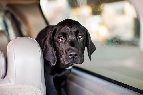 Viajar con tu perro en coche: consejos y cuidados