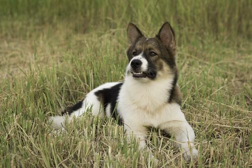 Perros reconocidos provisionalmente por la FCI